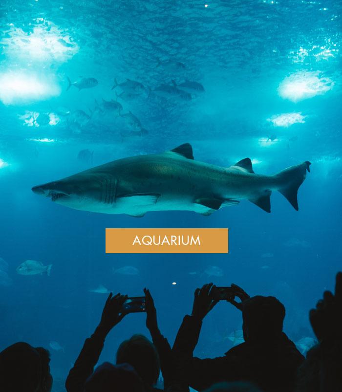 sitios_interes_aquarium2