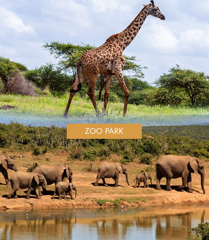 sitios_interes_zoo_park2